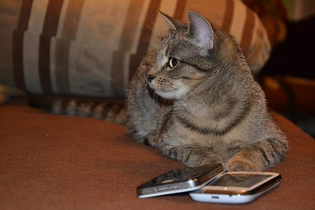Cat at the phone