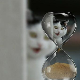 The Cat and the time